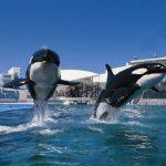 鴨川シ―ワールドの割引クーポン。最大2,290円割引も!お得に入園してシャチやイルカとふれあおう!
